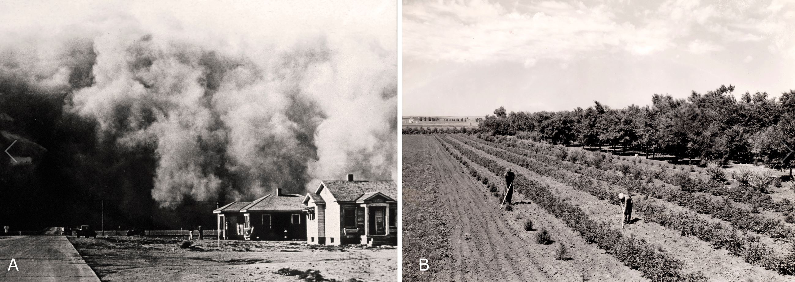 Figure 2. (A) A giant dust storm rolls across eastern Colorado during the 1930s. (B) Landowners tending to their windbreak planted with the Prairie States Forestry Project. Photos by the USDA, Natural Resources Conservation Service (A) and Forest Service (B).